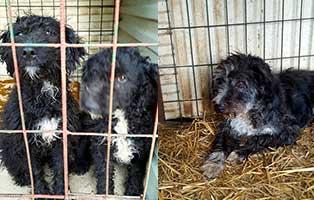 drama-bekescsaba-hunde-abgegeben Zecken beim Hund