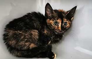 katzenbaby-uk068-20-weiblich-start-ins-leben Fünf Kitten aus dem Tierheim Unterheinsdorf suchen Start-ins-Leben Paten