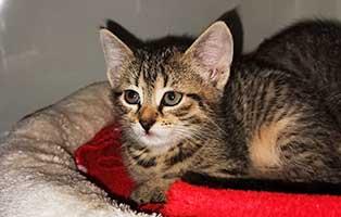 katzenbaby-uk069-20-weiblich-start-ins-leben Fünf Kitten aus dem Tierheim Unterheinsdorf suchen Start-ins-Leben Paten