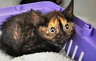 katzenbaby-uk072-20-weiblich-start-ins-leben Fünf Kitten aus dem Tierheim Unterheinsdorf suchen Start-ins-Leben Paten
