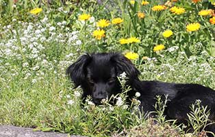 tierische-geschichten-rida-wiese Beauty heißt nun Janka