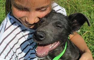 ungarisches-tierheim-hunde-cherry5 Drei Hunde aus dem ungarischen Tierheim Békéscsaba suchen Aufnahmepaten