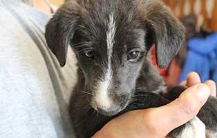 ungarisches-tierheim-hunde-cintia1 Drei Hunde aus dem ungarischen Tierheim Békéscsaba suchen Aufnahmepaten