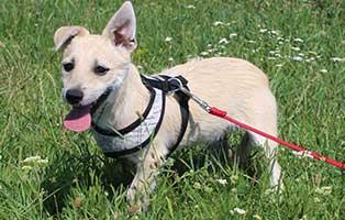 ungarisches-tierheim-hunde-luesci3 Drei Hunde aus dem ungarischen Tierheim Békéscsaba suchen Aufnahmepaten