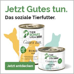 Banner-mobile-allgemein Katzenstation Netzschkau