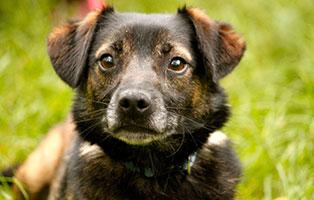 futterpatentier-fritz Hundevermittlung