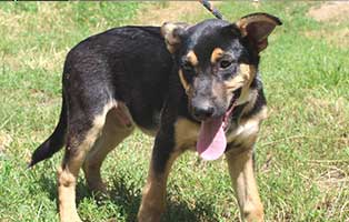 hund-havér-ungarn-ticket-ins-glueck Vier Junghunde aus Ungarn suchen Aufnahmepaten
