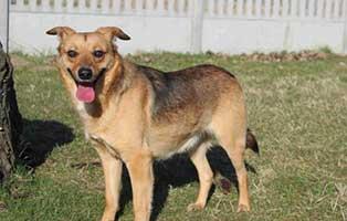 ruede-beige-polen-3Jahre Acht Hunde aus Polen suchen Aufnahmepaten