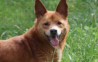 ruede-jonas-braun-polen-8Jahre Acht Hunde aus Polen suchen Aufnahmepaten