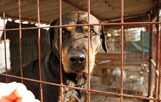 tierheim-bekescsaba-brauner-hund-gitter Laufende Tierschutz-Projekte