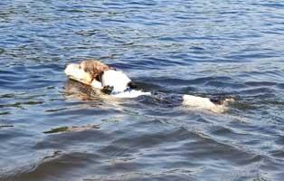 unfallhund-zerschmettertes-bein-training Gechippter aber nicht registrierter Hund hatte einen schweren Autounfall
