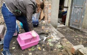 40-katzen-fangaktion-freilassung-300x191 40 Katzen müssen weg – Bald kommen schon die Bagger!