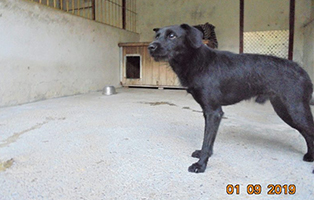 PT_390_Ruede_3Jahre Fünf Hunde aus Polen suchen Aufnahmepaten