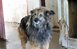PT_49_Huendin_6Jahre Aktuelles - Tierschutzliga Dorf
