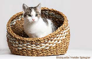 beitragsbild-entwurmen Katzen mögen es sauber und ordentlich