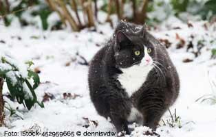 dicke-katzen 18 verwahrloste Katzen mussten gerettet werden