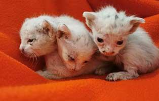 drei-schneeweisschen-in-thueringen-kittenfutter Aktuelles aus Thüringen