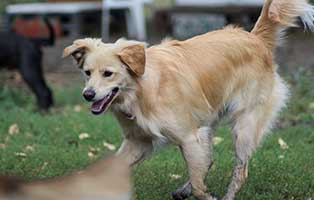 hund-buddy-gluecklich-vermittelt Kleine Geschichten - Grosse Geschichten