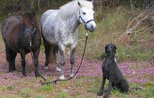 hund-max-gluecklich-vermittelt Hund Rex hat eine neue Freundin