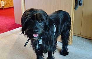 hund-olli-gluecklich-vermittelt-1 Hund Rex hat eine neue Freundin