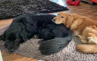 hund-rex-gluecklich-vermittelt Hund Rex hat eine neue Freundin