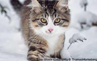 katzen-im-winter 18 verwahrloste Katzen mussten gerettet werden