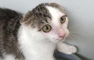katzenbaby-BK-165_20-weiblich 10 Kitten aus dem Tierheim Bückeburg suchen Start-ins-Leben Paten