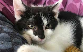 katzenbaby-BK-166_20-weiblich 10 Kitten aus dem Tierheim Bückeburg suchen Start-ins-Leben Paten