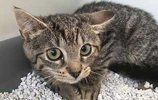 katzenbaby-BK-167_20-weiblcih 10 Kitten aus dem Tierheim Bückeburg suchen Start-ins-Leben Paten