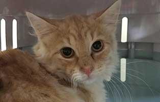 katzenbaby-BK-176_20-männll 10 Kitten aus dem Tierheim Bückeburg suchen Start-ins-Leben Paten