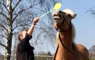 ratgeber-pferde-taget-stab Clickertraining für Pferde