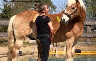 ratgeber-pferde-taget-stick-blume Clickertraining für Pferde