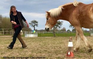 ratgeber-pferde-taget-stick-folgen Clickertraining für Pferde
