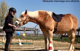 ratgeber-pferde-taget-stick-training Clickertraining für Pferde