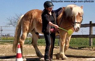 ratgeber-pferde-taget-stick Pferderatgeber