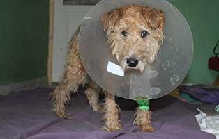 strassenhund-kisci-tumore-trichter Verdienstorden des Landes Brandenburg für Dr. Annett Stange