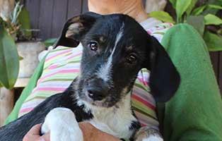 welpe-01-bekescsaba-start-ins-leben Ungarisches Tierheim in Not - 250 Tieren droht der Tod