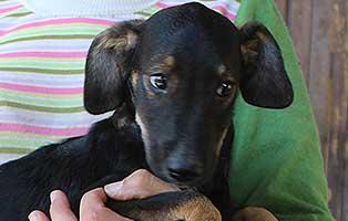 welpe-04-bekescsaba-start-ins-leben Sieben mutterlose Welpen im Tierheim Békéscsaba suchen Start-ins-Leben Paten