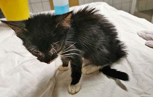 18-katzen-unterernaehrt-tierschutzliga-dorf-gescheckt Vermittlungstier