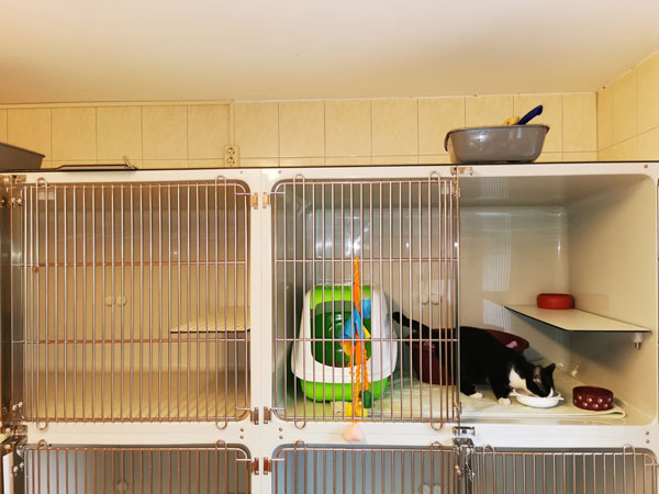 alte-raeumlichkeiten-kaefige Quarantäne-Station für Babykatzen im Tierheim Bückeburg