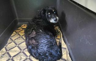 hund-borstel-polen-aufnahmepatenschaft Zwei sehr mitgenommene Hunde aus Polen suchen Aufnahmepaten