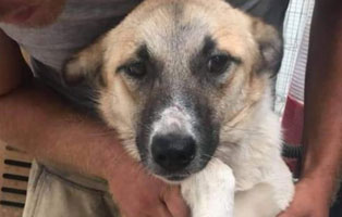 hund-koda-weiblich-rumaenien-futterpaten Elliot - alter Tierschutzhund möchte sich verabschieden und bedanken