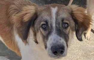 hund-maennlich-rumaenien-herbert Acht rumänische Straßenhunde bekommen eine riesige Chance