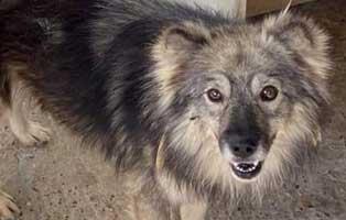 hund-maennlich-rumaenien-merlin Acht rumänische Straßenhunde bekommen eine riesige Chance