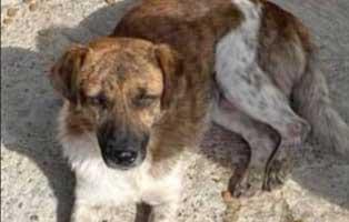 hund-maennlich-rumaenien-pino Acht rumänische Straßenhunde bekommen eine riesige Chance