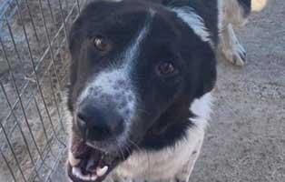 hund-maennlich-rumaenien-zorro Acht rumänische Straßenhunde bekommen eine riesige Chance