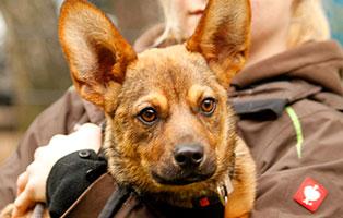 hund-nathan-staupe-nachwirkung-arm Verwahrloste Rosalie hatte Glück im Unglück
