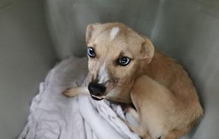hund-scratch-polen-aufnahmepatenschaft Zwei sehr mitgenommene Hunde aus Polen suchen Aufnahmepaten