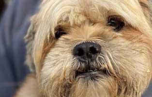 hund-weiblich-rumaenien-anja Acht rumänische Straßenhunde bekommen eine riesige Chance