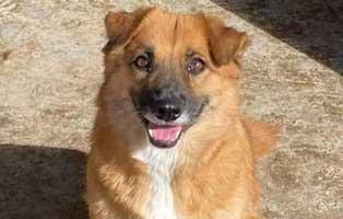 hund-weiblich-rumaenien-lisa Acht rumänische Straßenhunde bekommen eine riesige Chance